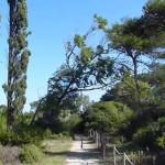 Le Cesine - San cataldo Lecce - antico belvedere b&b